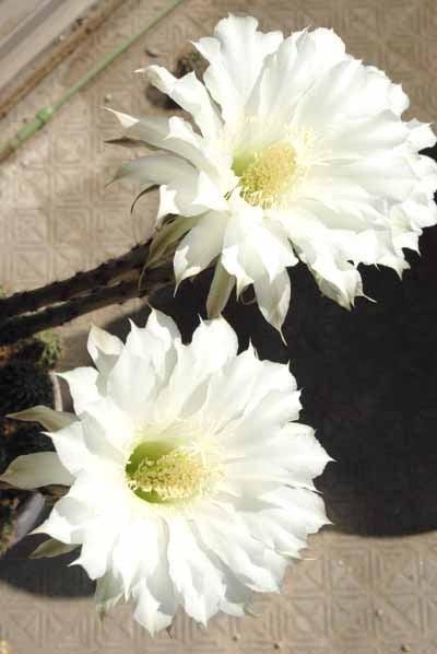 ぷりん・カカオ・カリンのゆる~い日記