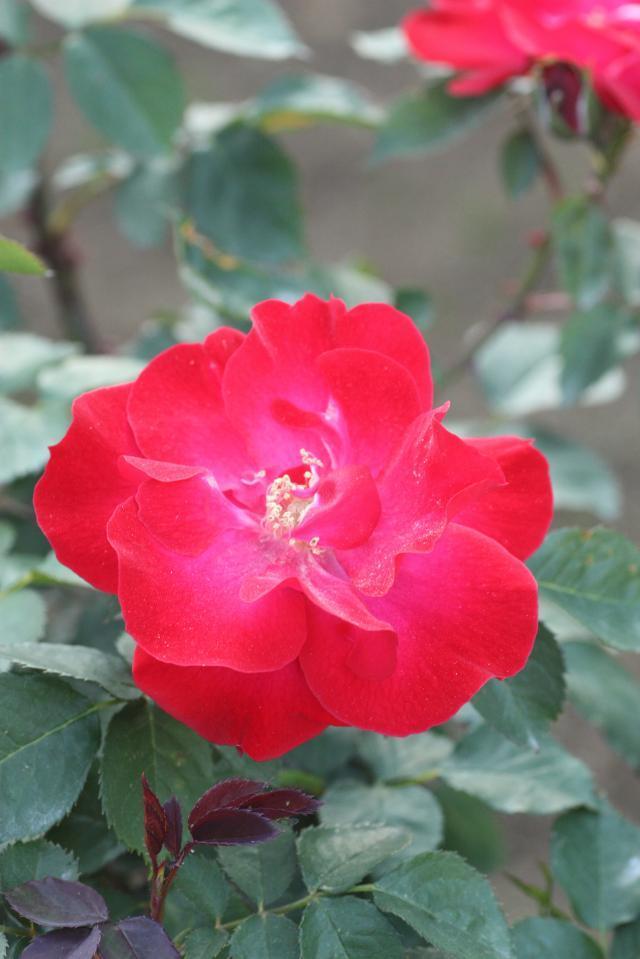 神社と花と光の写真 天☆龍-bara