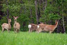 $ムツゴロウ動物王国のブログ-シカ群れ