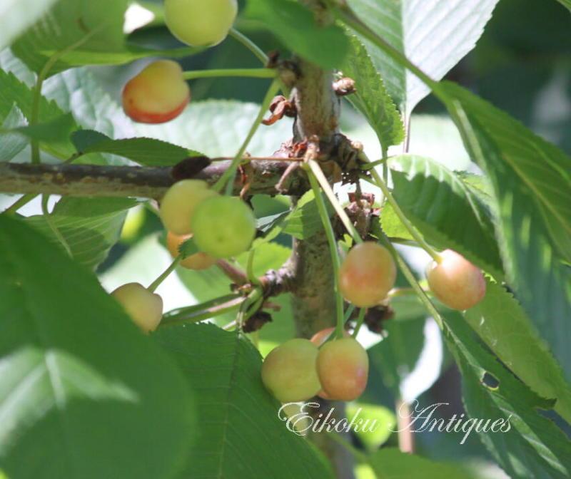 美しい国、英国のアンティーク&カントリーライフ-Cherries