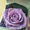 紫のバラの人の画像