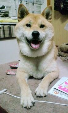 柴犬ケンシロウ♪-100622_2127~02.jpg