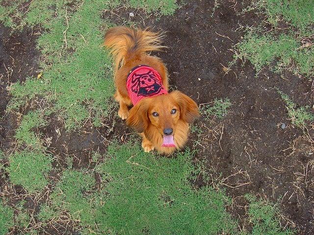旅犬Lanileaのほほん風船記-豊洲ドッグラン