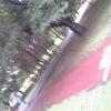 樹林公園の雨上がりの匂い~パート3~の画像