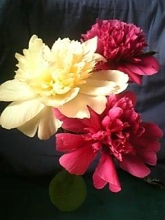 $人生なんとかなるんだべか・・・-芍薬の花♪