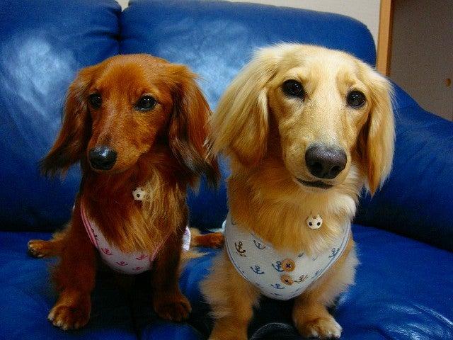 旅犬Lanileaのほほん風船記-Lani&Lea