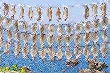 白神山地ツアーで能代山本地区の活性化すっぺ-福寿草イカ刺し丼5