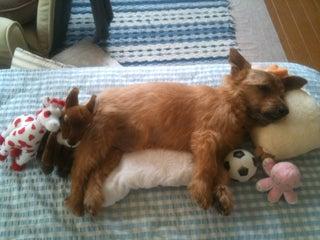 愛犬ラルフのリンパ腫闘病記