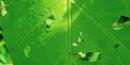 笑顔の虫食い葉っぱ
