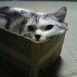猫チョキン
