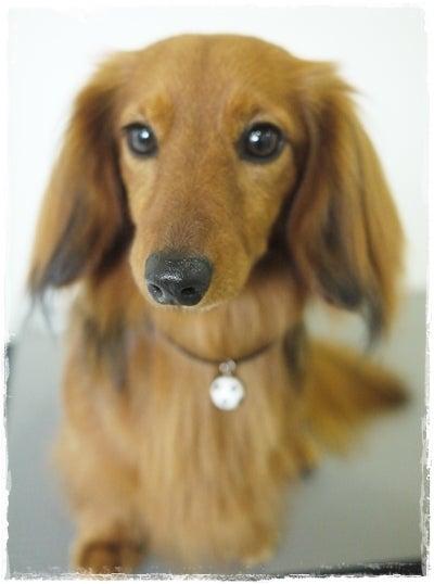 旅犬Lanileaのほほん風船記-Lani