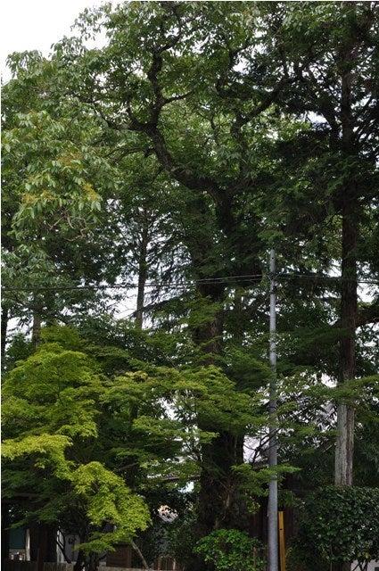 茶々吉とデジ一 のんびり旅-2010/6/30多田神社6