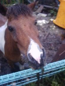 馬を愛する男のブログ Ebosi Kogen Hose Park -チェリー