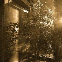 $「銀の葉」-光