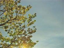 $「銀の葉」-光の影のタペストリー