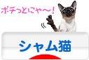 にほんブログ村 猫ブログ シャム猫へ