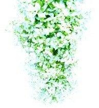 flowers*~my favorite things
