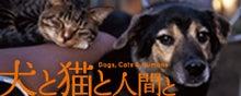 TEAM PLAYBOW 「犬と猫と人間と」上映会ブログ-inunekoバナー1