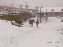馬を愛する男のブログ Ebosi Kogen Hose Park -雪の中での乗馬