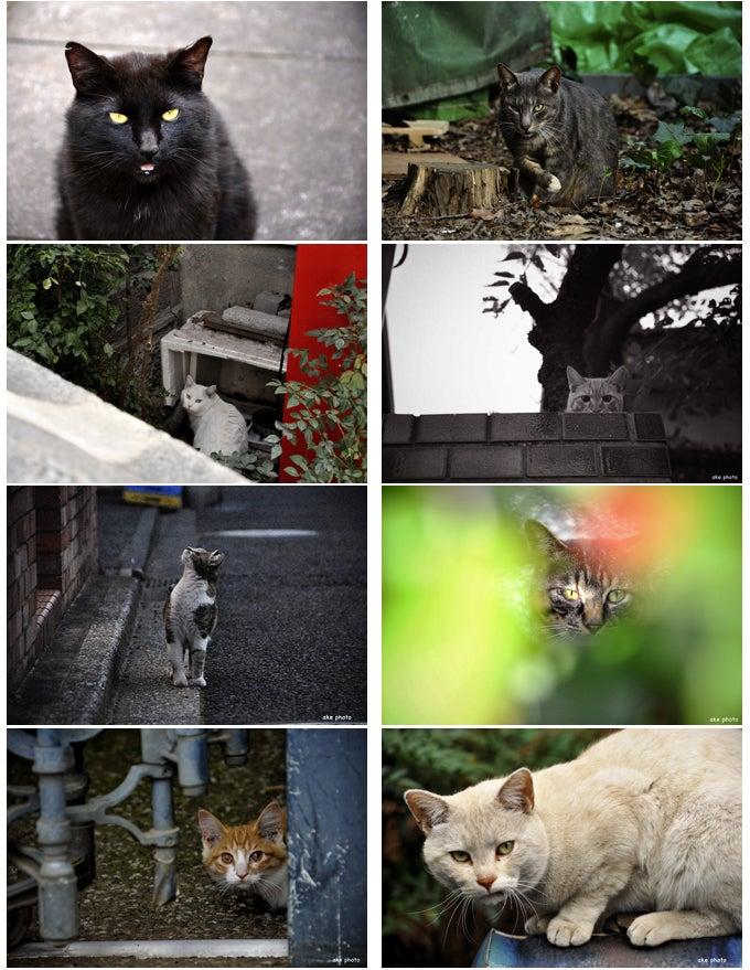 ☆ake photo 権藤朱実のブログ☆ by Ameba