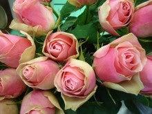 今日のバラ-ベルローズ