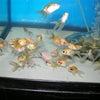 2010年7月21日現在、新着魚のご紹介です その2の画像