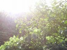 岩下フルーツ-P1050048.jpg