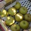 梨、収穫開始の画像