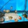 2010年7月24日現在、新着魚のご紹介です その1の画像