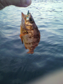 同心丸Jr.の釣り日記 『一魚一会』-2010072518280000.jpg