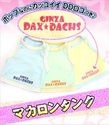 銀座ダックスダックス-ミニチュアダックス
