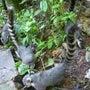 イグアスの滝 (ブラ…