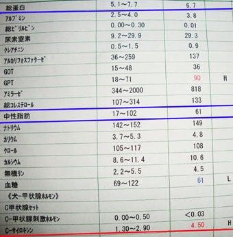 スノボ犬パンジーとあこぷー呑みアル記-検査2
