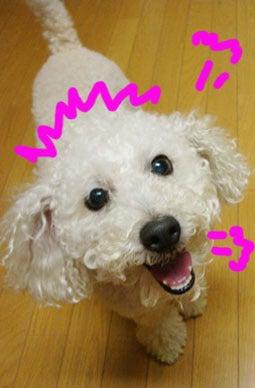 スノボ犬パンジーとあこぷー呑みアル記-がんばる