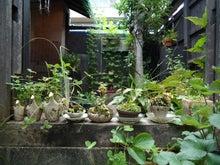 $chacoのブログ-7/26 鉢植え