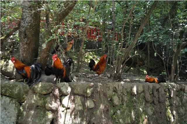 茶々吉とデジ一 のんびり旅-2010/7/27石上神宮5