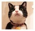 猫と引きこもり生活 ファーさんのシアワセライフ