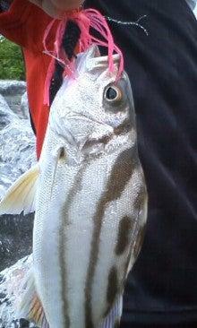 魚種格闘技戦