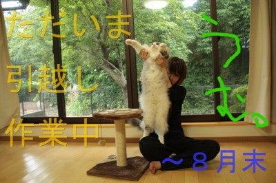 D猫殿下@ぬああああああああああああ