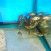 2010年7月29日現在、新着魚のご紹介ですの画像