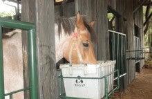 馬を愛する男のブログ Ebosi Kogen Hose Park -入厩後の初食事