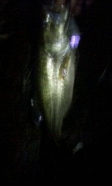 愛媛野池のバスフィッシング釣行記-トップにて