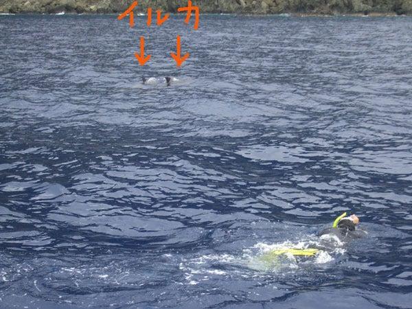 オーシャン&フィールドガイド 『ブルーレース』  小笠原の写真日記