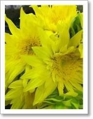 花のある暮らしのレシピ♪-100811-2