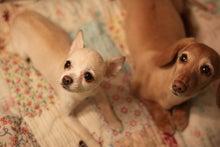 山瀬功治オフィシャルブログ「こーじのblog」by Ameba-るしあとチト