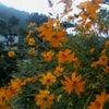 帰省中*花の画像