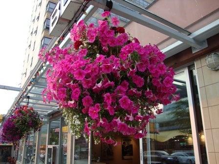 dahliaのブログ-Aug 16'10 ④ アイカナダ