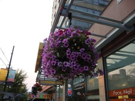 dahliaのブログ-Aug 16'10 ⑤ アイカナダ