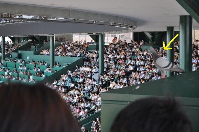 茶々吉とデジ一 のんびり旅-2010/8/18甲子園球場4