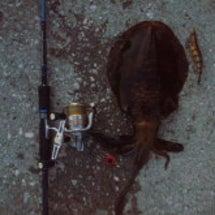 ある日の釣果報告②